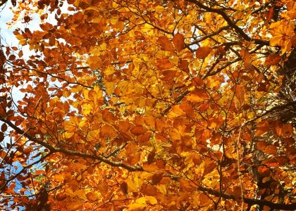 foret-automne-val-de-vienne